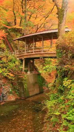 紅葉の樹林と舞い散る葉と五台橋 Footage