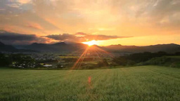 Blooming buckwheat field and mountains at sunset Footage