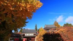 Ginkgo Trees, And The Northern Watchtower And Eastern Entrance Of Ueda Castle In stock footage