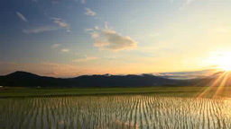 Scenery Of Rural Rice Field And Sunrise Over Mt. Eboshidake stock footage