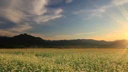 Sunset Over Aoiki And Tokkozan Mountains And Buckwheat Flower Garden stock footage