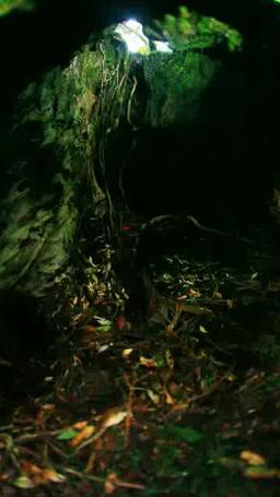 Inside Large Tree stock footage