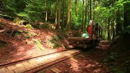 Trolley car and trolley car road and cedar forest Footage