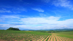 Fields Of Adzuki Beans And A Tractor stock footage