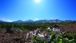 Flowers of Chishimabukuro and the Tokachi mountain range Footage