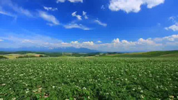 Blooming potato fields and Tokachi mountain range Footage