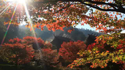 Landscape of the fall colors of bright red maple leaves and rising smoke from a  Footage