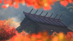 Bright red colors of maple leaves and rising smoke from a thatched roof house in Footage