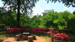 上田城とテーブルと椅子とツツジと木もれ日 Footage