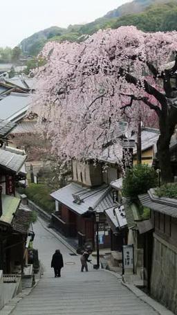 産寧坂の桜 ภาพวิดีโอ