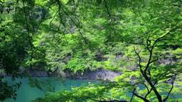 新緑の嵐山 Footage