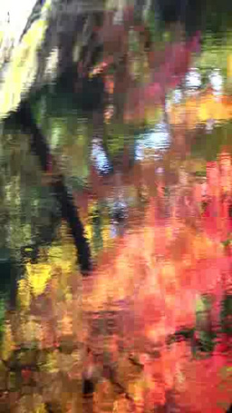 Autumn leaves reflected in the water Footage