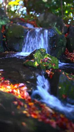 滝とモミジ 영상물