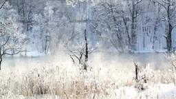 鳥沼公園の樹氷とけあらし Footage