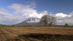 羊蹄山とさくらんぼの木 Footage