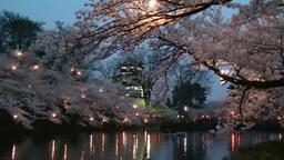 高田城の夜桜 影片素材