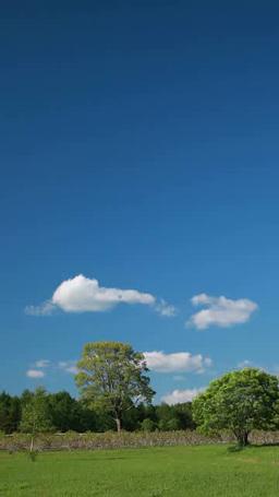 開田高原の林と雲 영상물