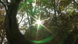 紅葉したブナ林と木漏れ日 Footage