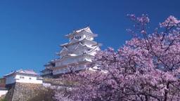姫路城と桜 stock footage