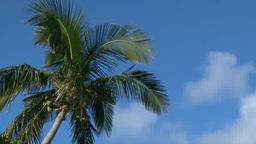 小笠原父島の椰子の木と白い雲浮かぶ青空 Footage