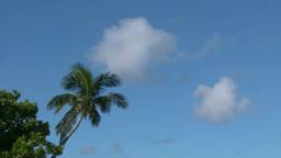 小笠原父島の風にゆれる椰子の木と青空と雲 Footage