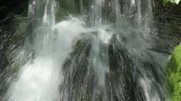 苔と流れ Footage