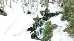 安比高原 残雪のブナ林を流れる雪解け水 Footage