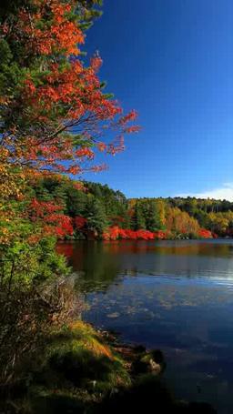 秋の白駒池 影片素材