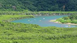 マングローブ原生林とカヌー Footage