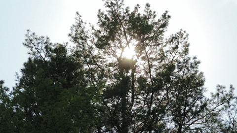 Tilt shot of trees while wind blows and sun shines Stock Video Footage