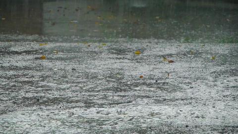 Heavy tropical rain Stock Video Footage