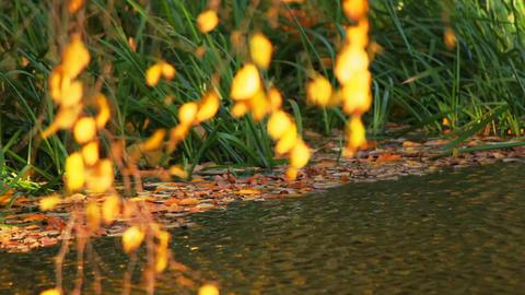 The autumn wind Stock Video Footage