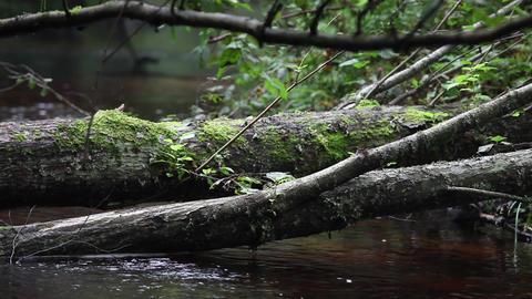 fallen tree Stock Video Footage
