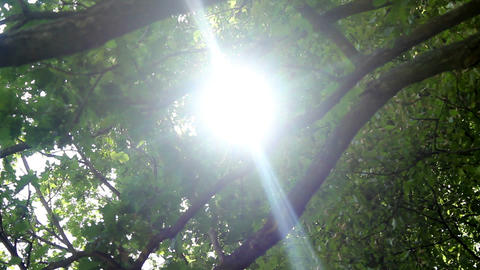 Sun in trees Stock Video Footage