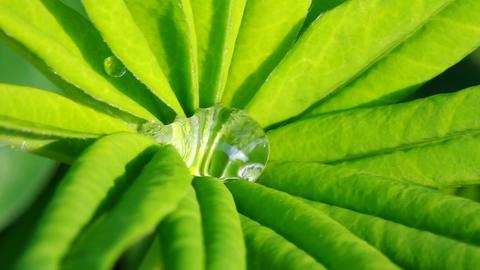 water drop on green leaf macro Stock Video Footage