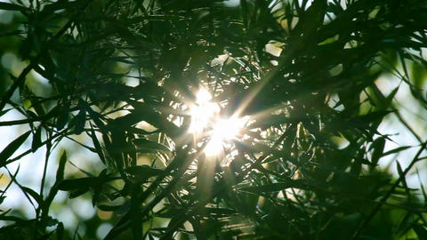 bright sun shines through tree foliage - timelapse Stock Video Footage