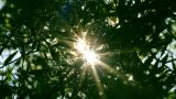 bright sun shines through tree foliage - timelapse Footage