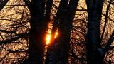 timelapse with sunset in winter forest Footage