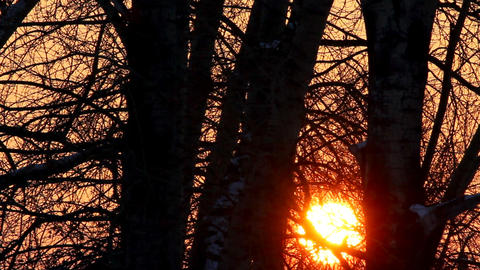 timelapse with sunset in winter forest Stock Video Footage