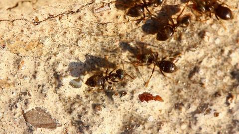 ants macro Stock Video Footage