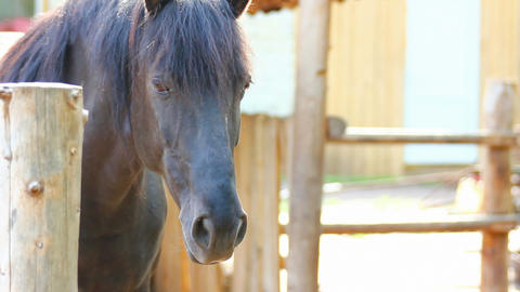 horse Stock Video Footage