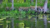 summer lake in forest Footage