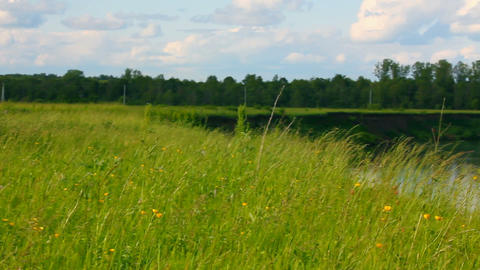 summer landscape with meadow and river Stock Video Footage