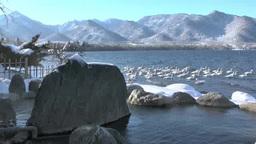 コタンの湯と屈斜路湖白鳥 Footage