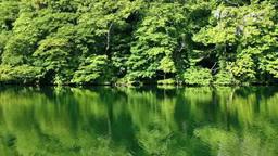 十二湖新緑の落口の池 Footage