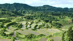 Rice terraces of Hoshitoge Footage