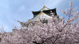 Osaka Castle and cherry blossoms Footage