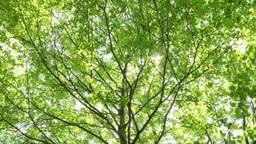 木漏れ日の新緑林 レール撮影 Footage