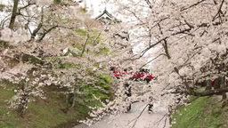 Hirosaki Castle and cherry blossoms Footage