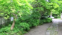 旧家の庭 Footage